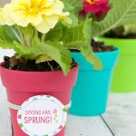 Spring Flowers Gift Ideas